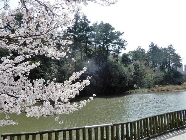 南郷公園・亀山城堀 (1)