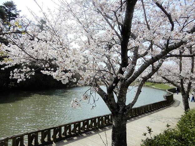 南郷公園・亀山城堀 (2)