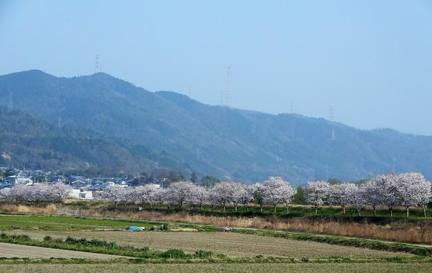 保津川(桂川) (5)