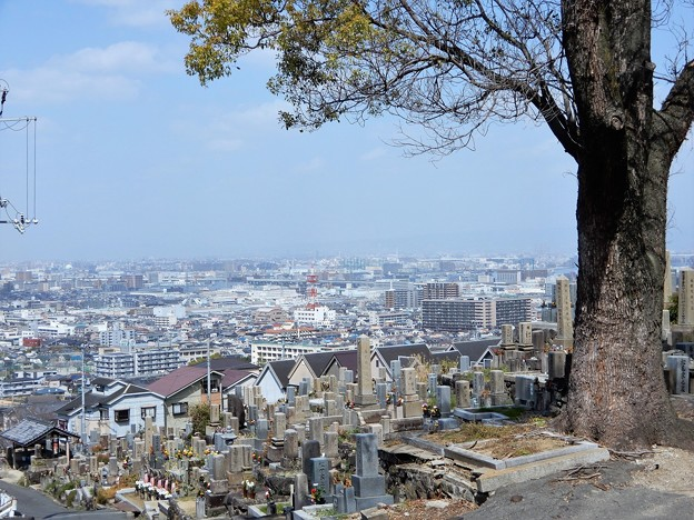 墓地とクスノキ (2)