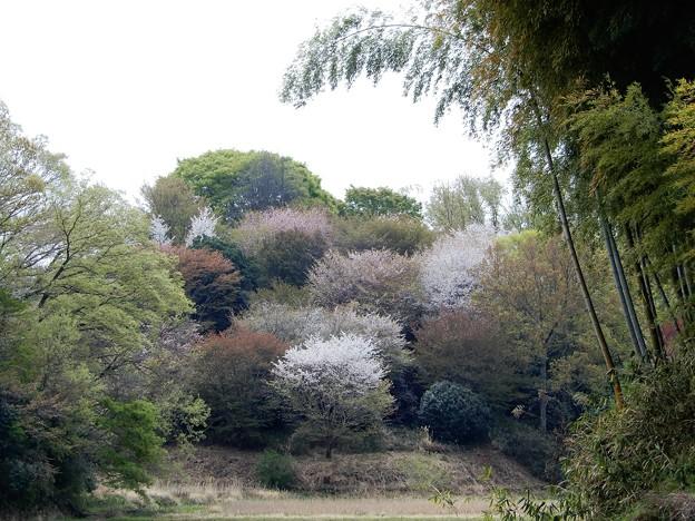 12桃畑の道から香具山東麓を見る