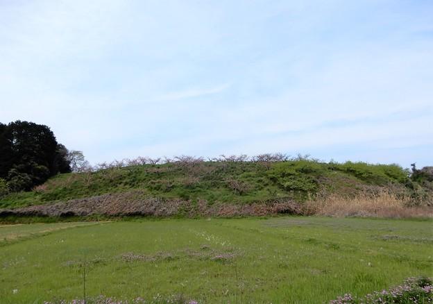 13香具山北東麓の桃畑(東側から)