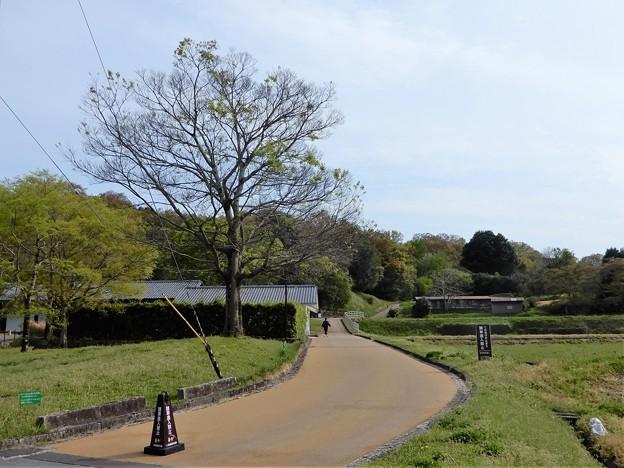 22甘橿丘