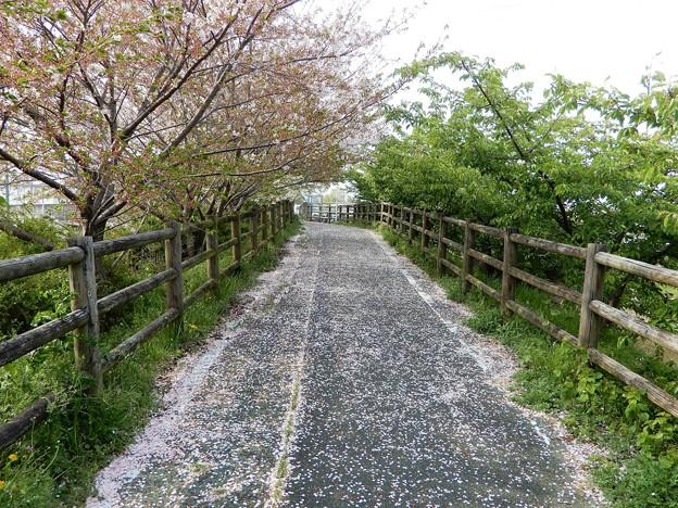 23飛鳥川自転車道 (2)