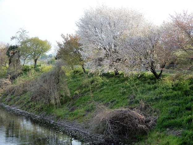 26飛鳥川自転車道 (1)