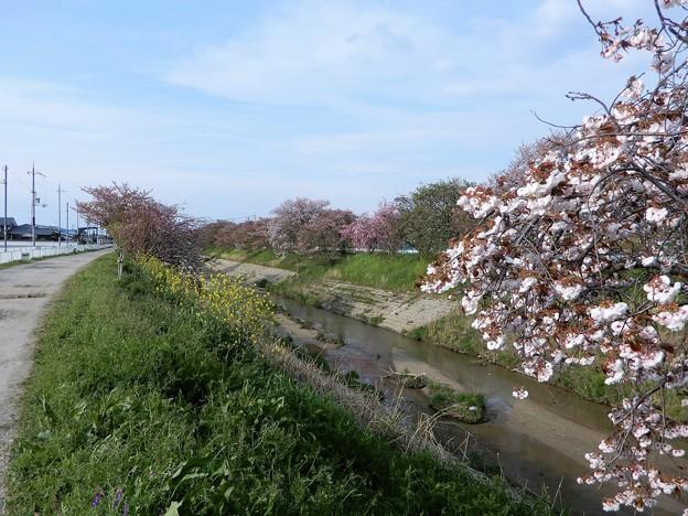 26飛鳥川自転車道 (2)