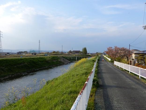 26飛鳥川自転車道 (3)