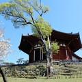 興福寺・南円堂 (1)