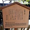 春日大社・林檎の木 (2)