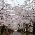 0413.1405岳温泉・桜坂