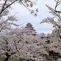 0413.1543鶴ヶ城