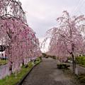 0414.0937喜多方・日中線枝垂桜