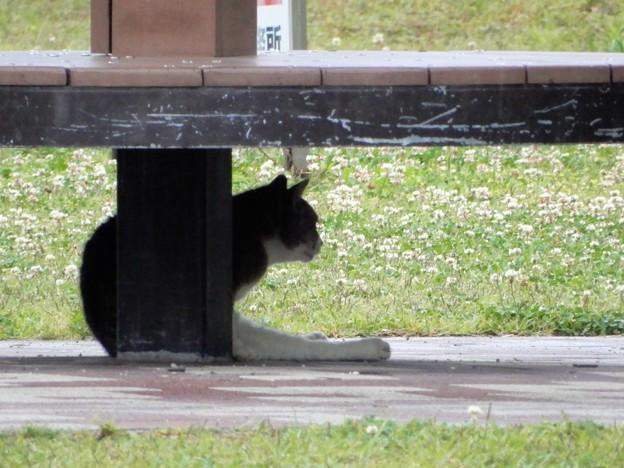 猫も雨宿り(花園中央公園) (1)