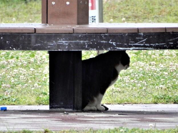 猫も雨宿り(花園中央公園) (2)