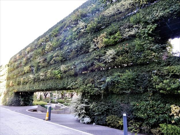 新梅田シティの緑の壁 (1)