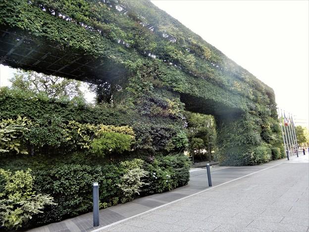 新梅田シティの緑の壁 (2)