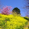 黄色い丘の風景
