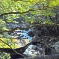 Photos: 滑床渓谷.春の木漏れ日