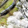 Photos: 春の予讃線を行く