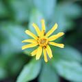 Photos: 蟻と花