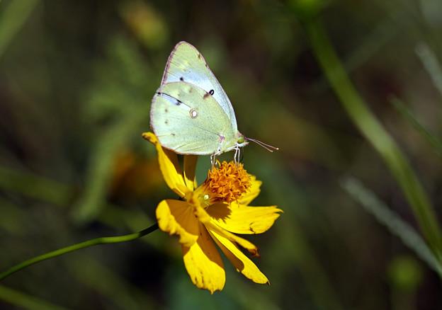 蝶、秋の蓄え