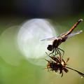 蜻蛉のひととき