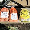 Photos: 今年の種芋3kg