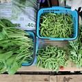 5月11日菜園収穫