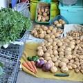 Photos: 今日の収穫(ジャガイモ3種)