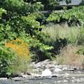 日照りで水不足の川