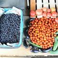 Photos: 7月28日の収穫