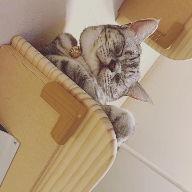 眠いのにゃあ