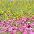 Photos: 夏から秋へバトンタッチ