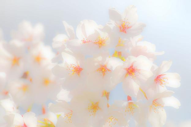 2104桜(余白無し)改