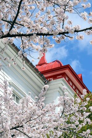 2104大寶館と桜