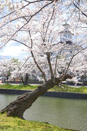 2104お堀端の桜04