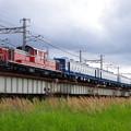 IMGP4723