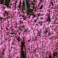 Photos: 花盛り