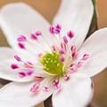 Photos: 桜の前に