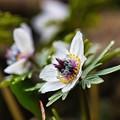Photos: 春を告げる