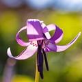 Photos: 花弁の舞い