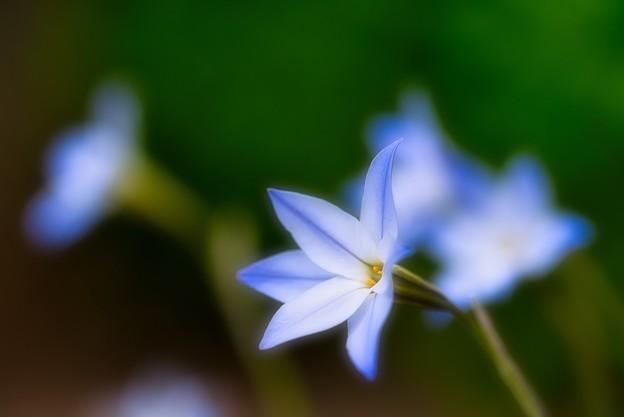 綺麗なブルーで