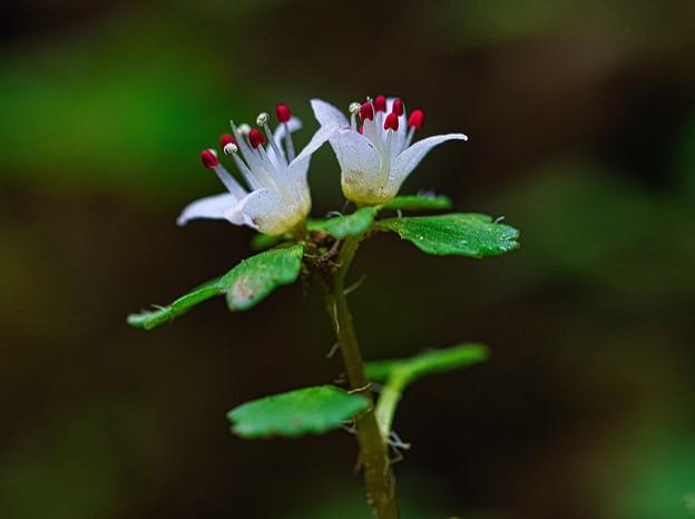 Photos: 初めての花たち
