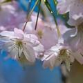 桜の季節も過ぎ