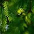 緑の季節へ