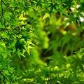 Photos: 緑の向こう