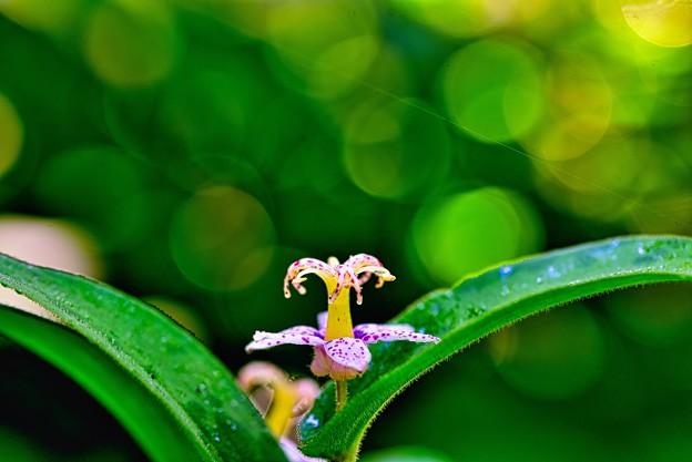 Photos: ガーデンの彩