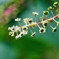 Photos: 花から実へ