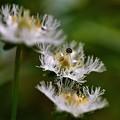 Photos: お髭のお花