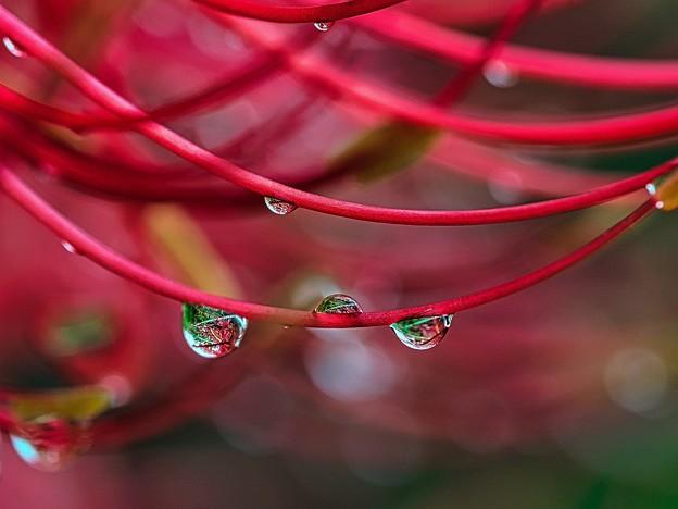 Photos: 季節を変える雨